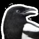 Magpie's picture